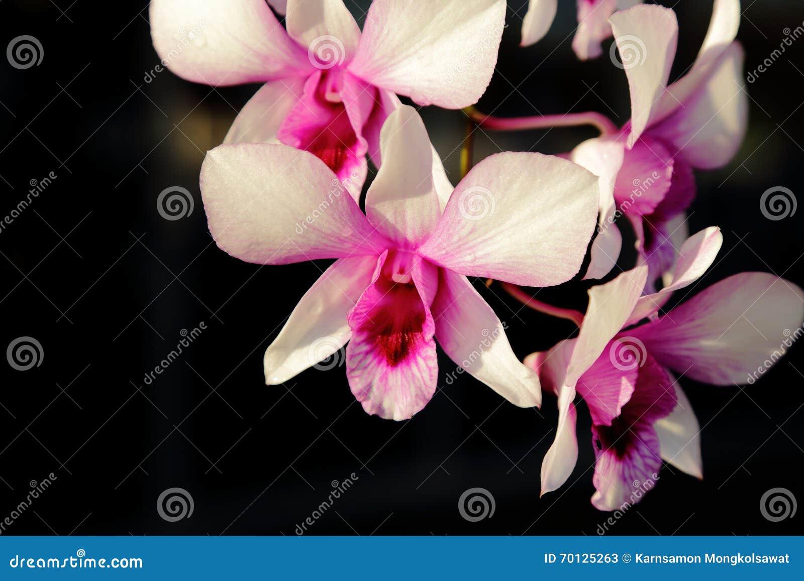 orchidee soleil