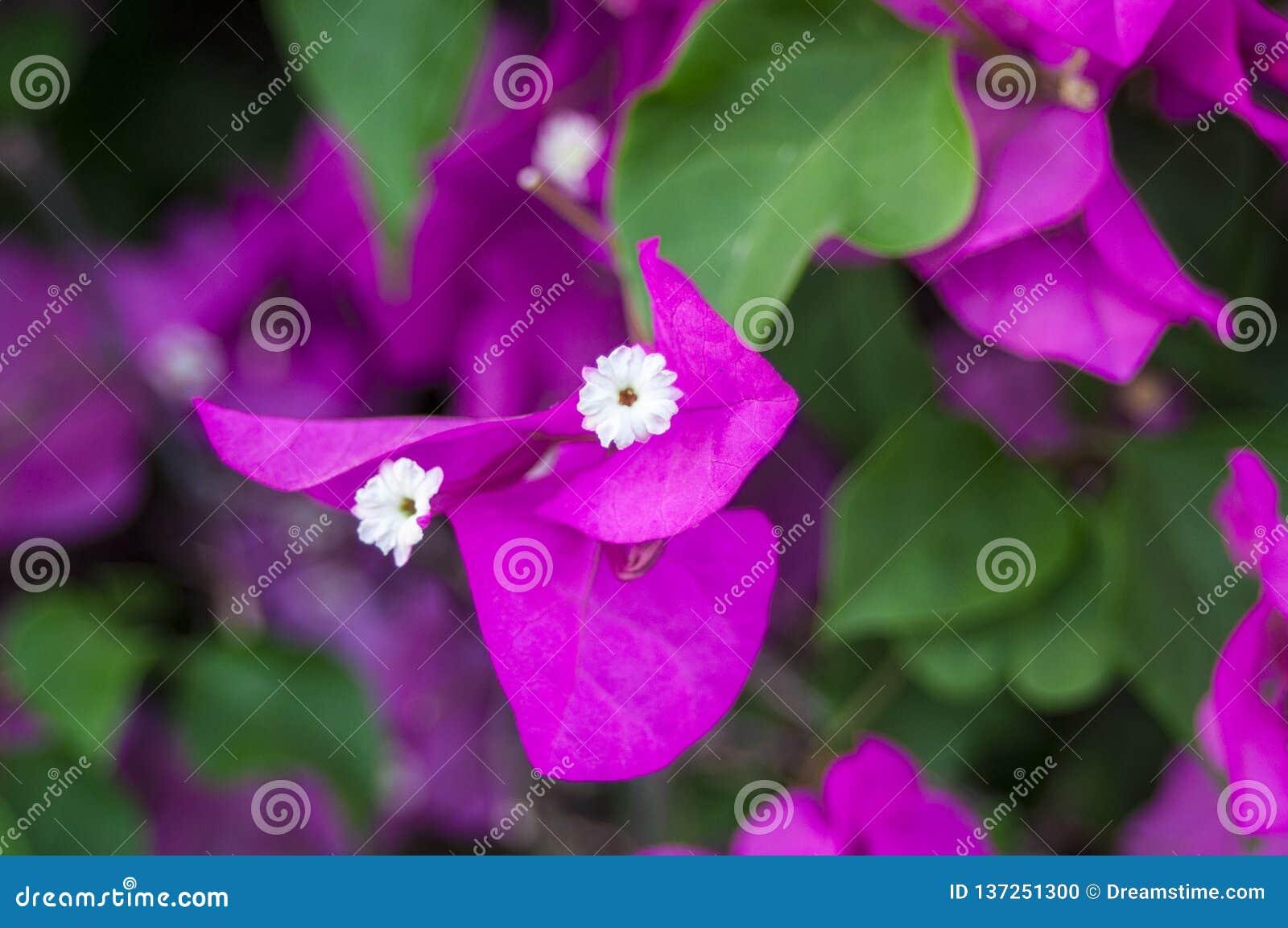Orchidée rose tendre de phalaenopsis sur le fond brouillé De belles fleurs molles sont vues dans une composition artistique hybri