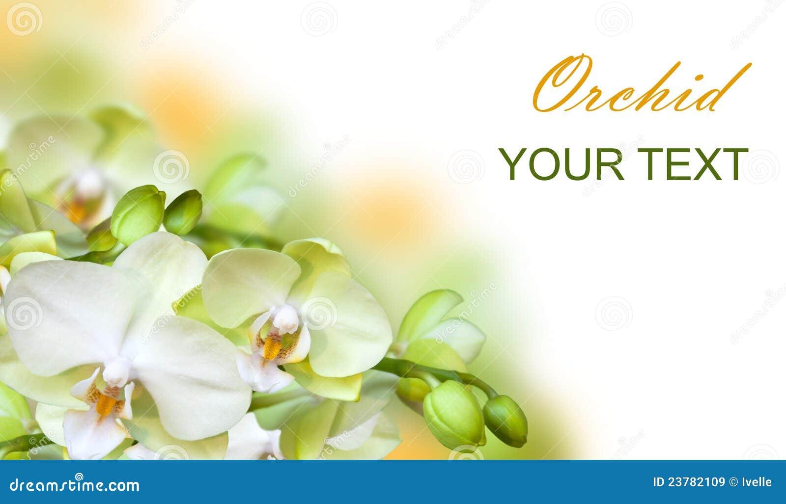 orchidee blanche verte