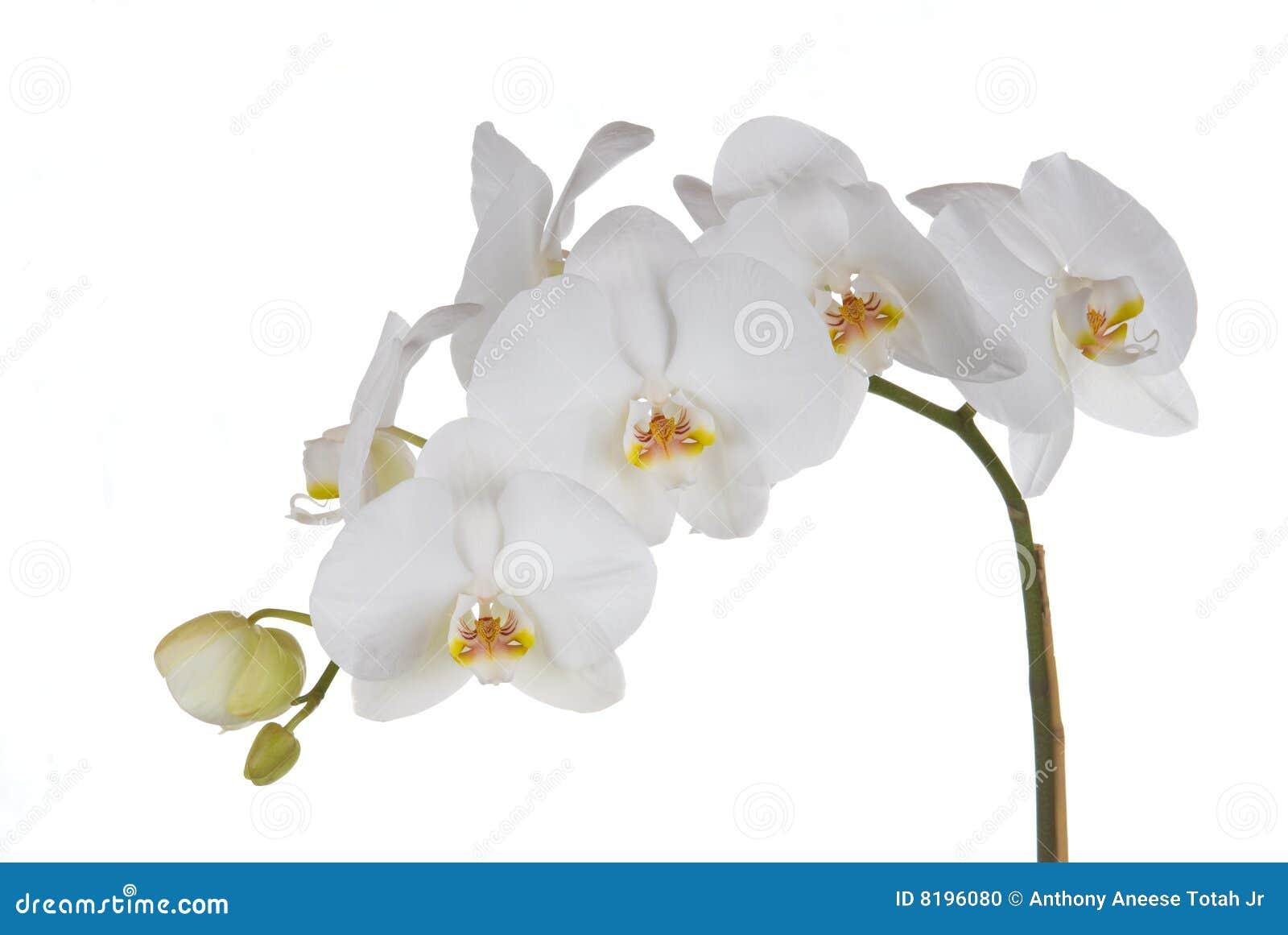 Открытки с орхидеями
