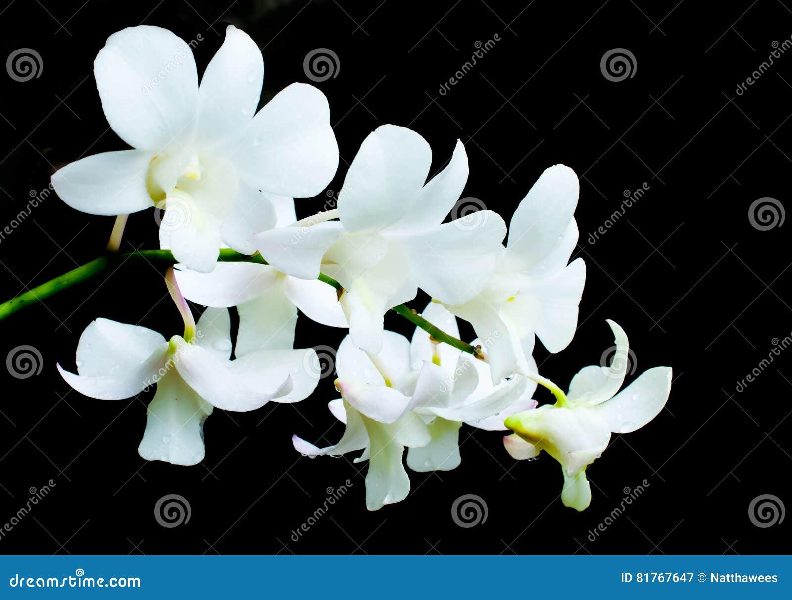 orchidées blanches sur les fleurs noires de fond photo stock