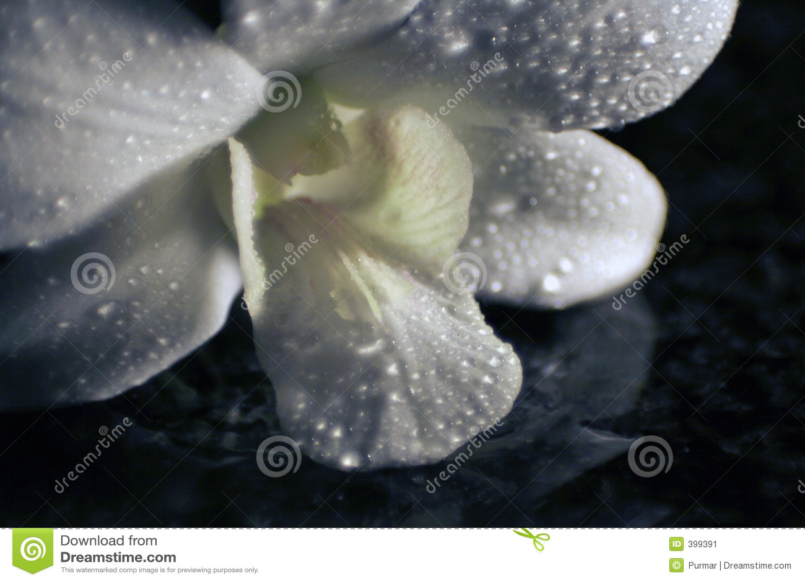 Orchid αντανάκλαση