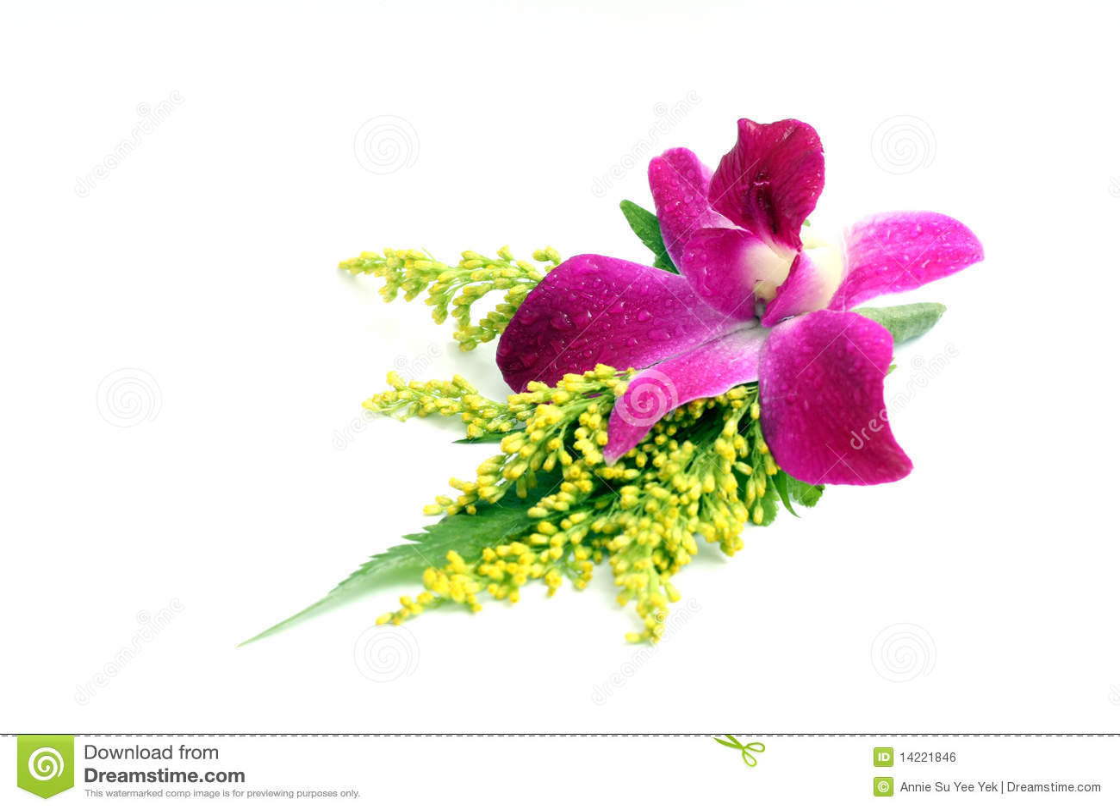 Orchid κορσάζ
