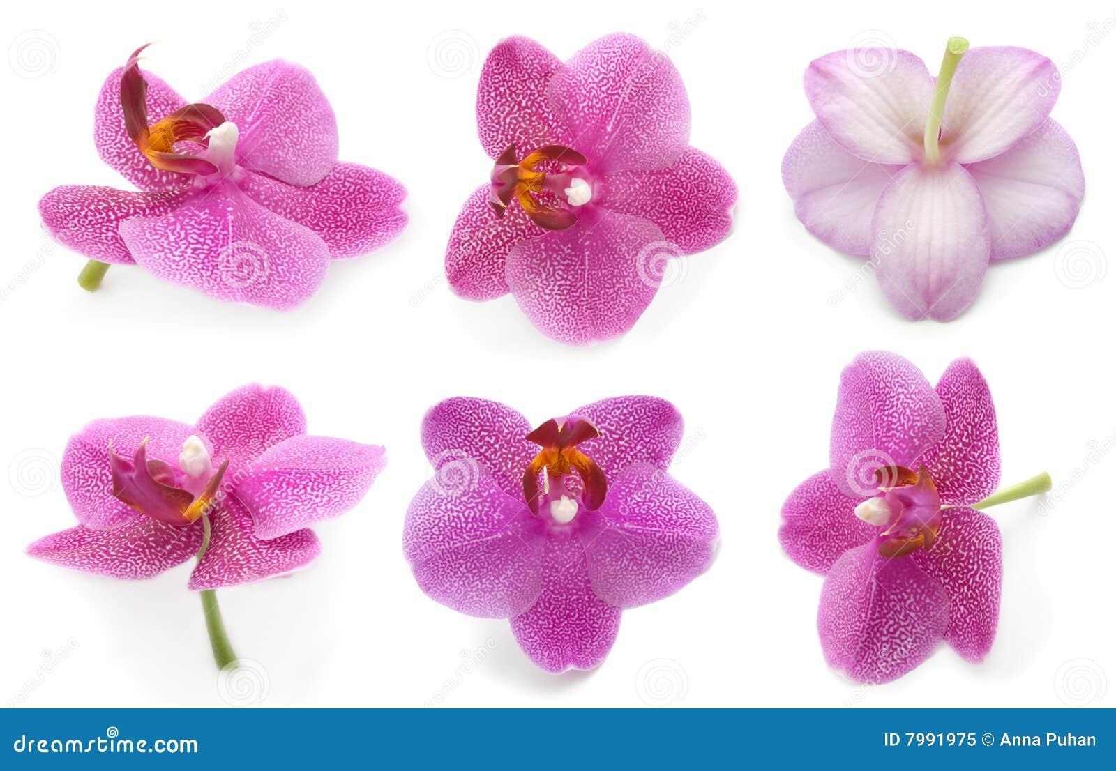 Orchid συλλογής