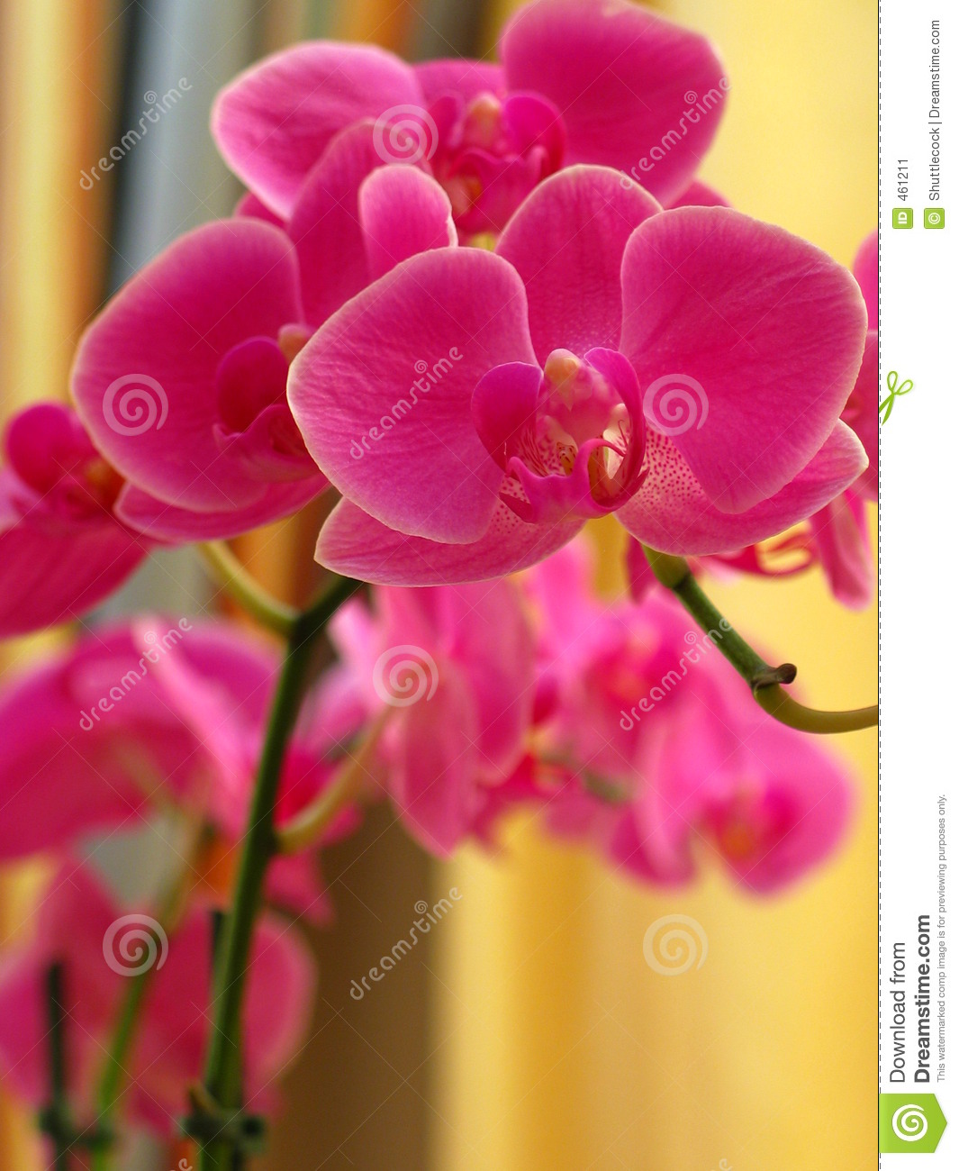 Download Orchid stock image. Image of macro, pink, plant, flower - 461211