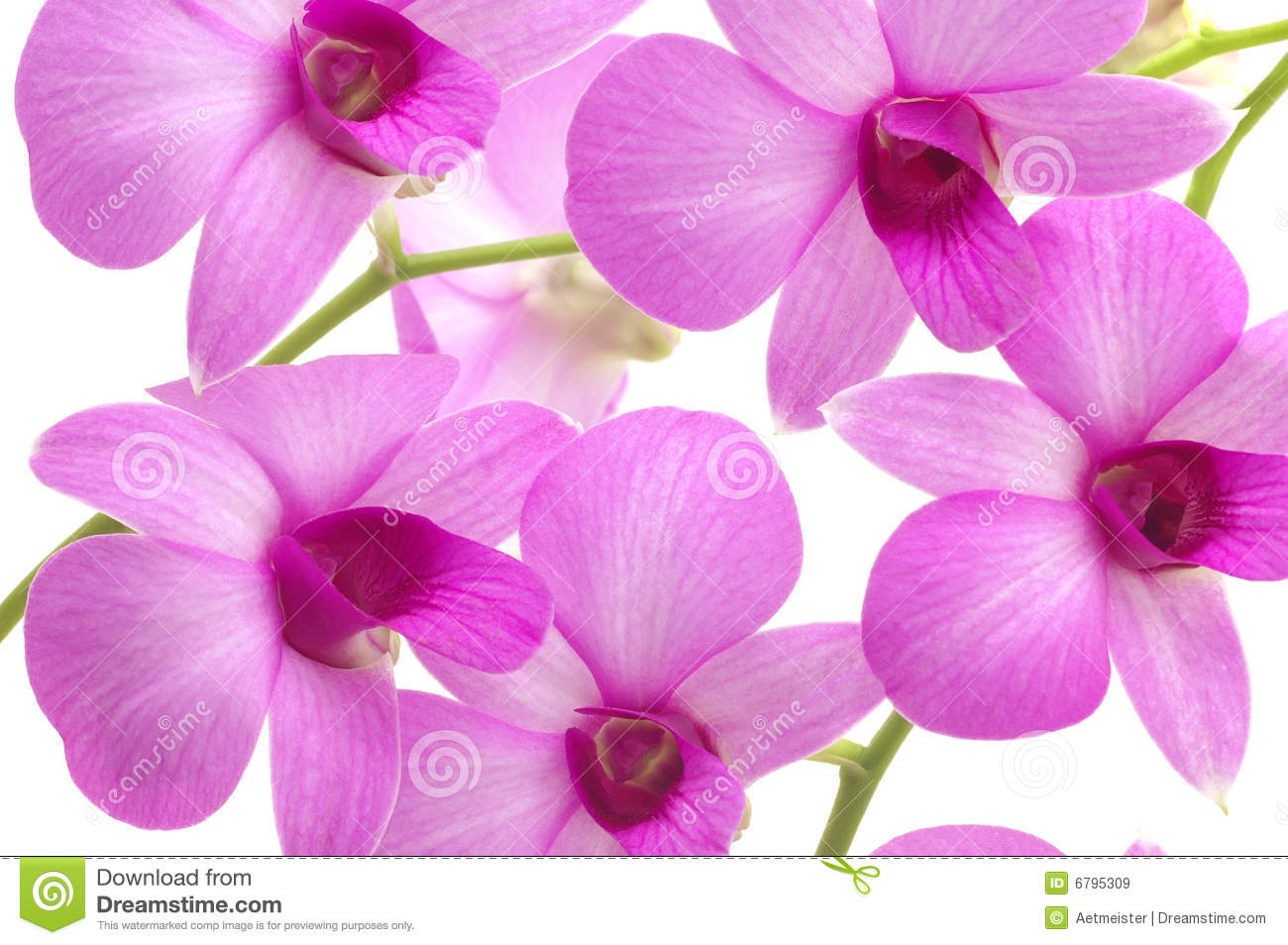 Orchid Background Royalty Free Stock Images - Image: 6795309
