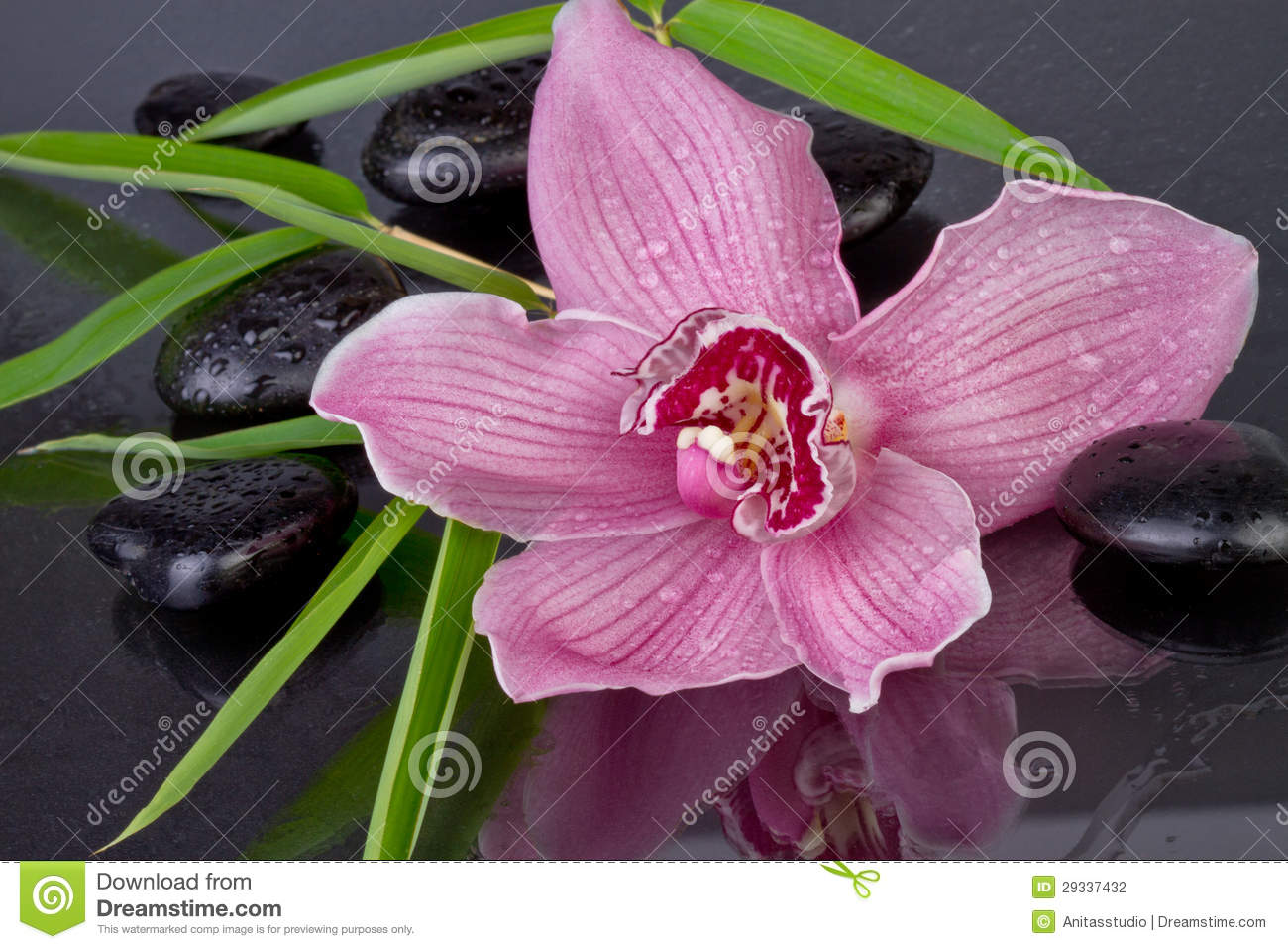 Orchid with bamboo and zen stones
