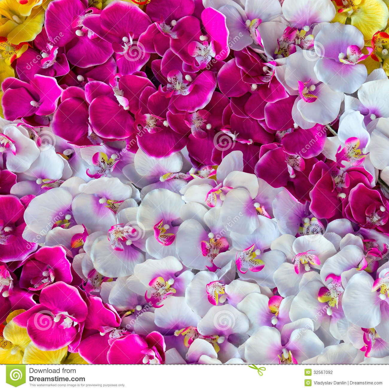 Orchid Decoration Background Stock Photo