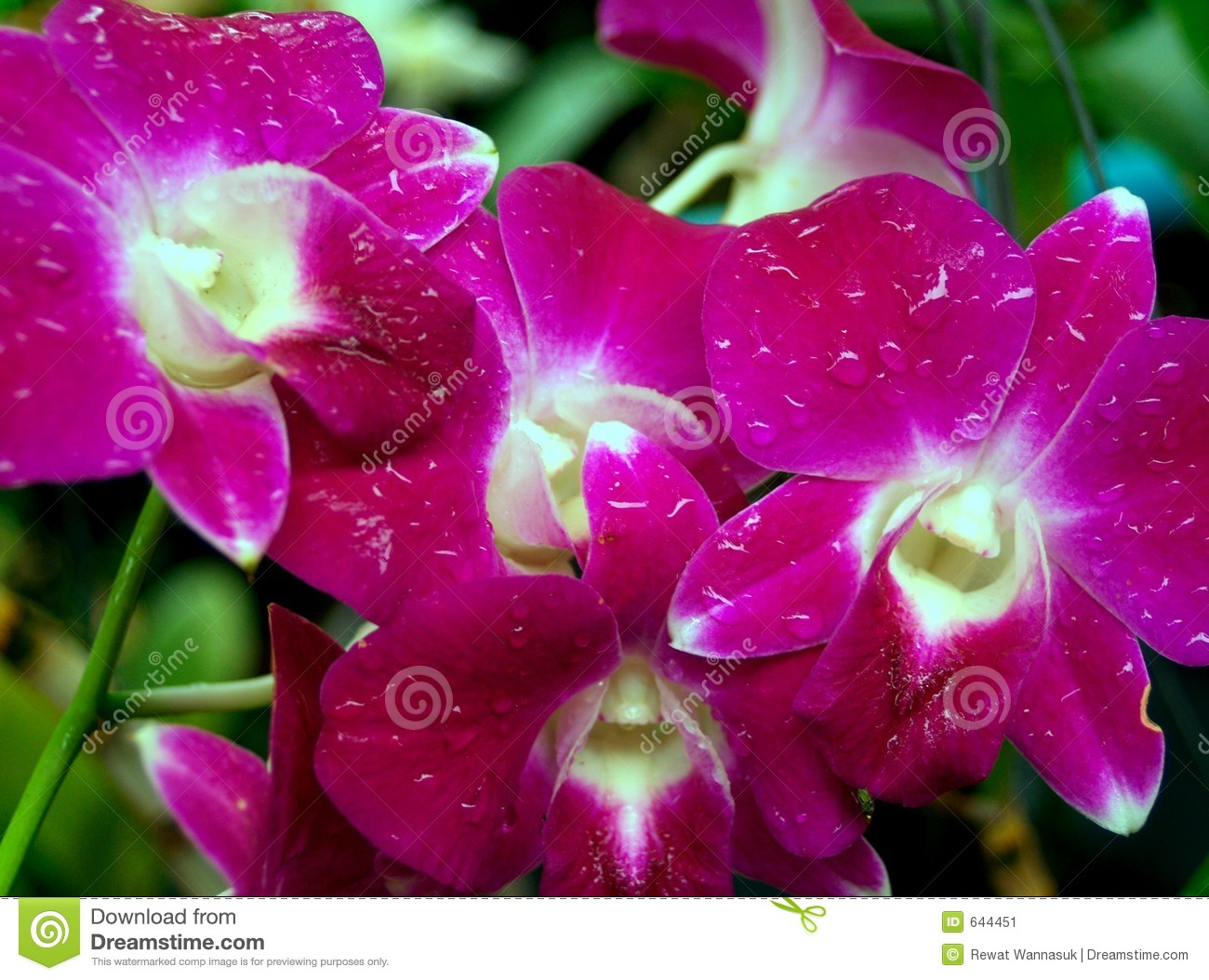 Orchid flower 05