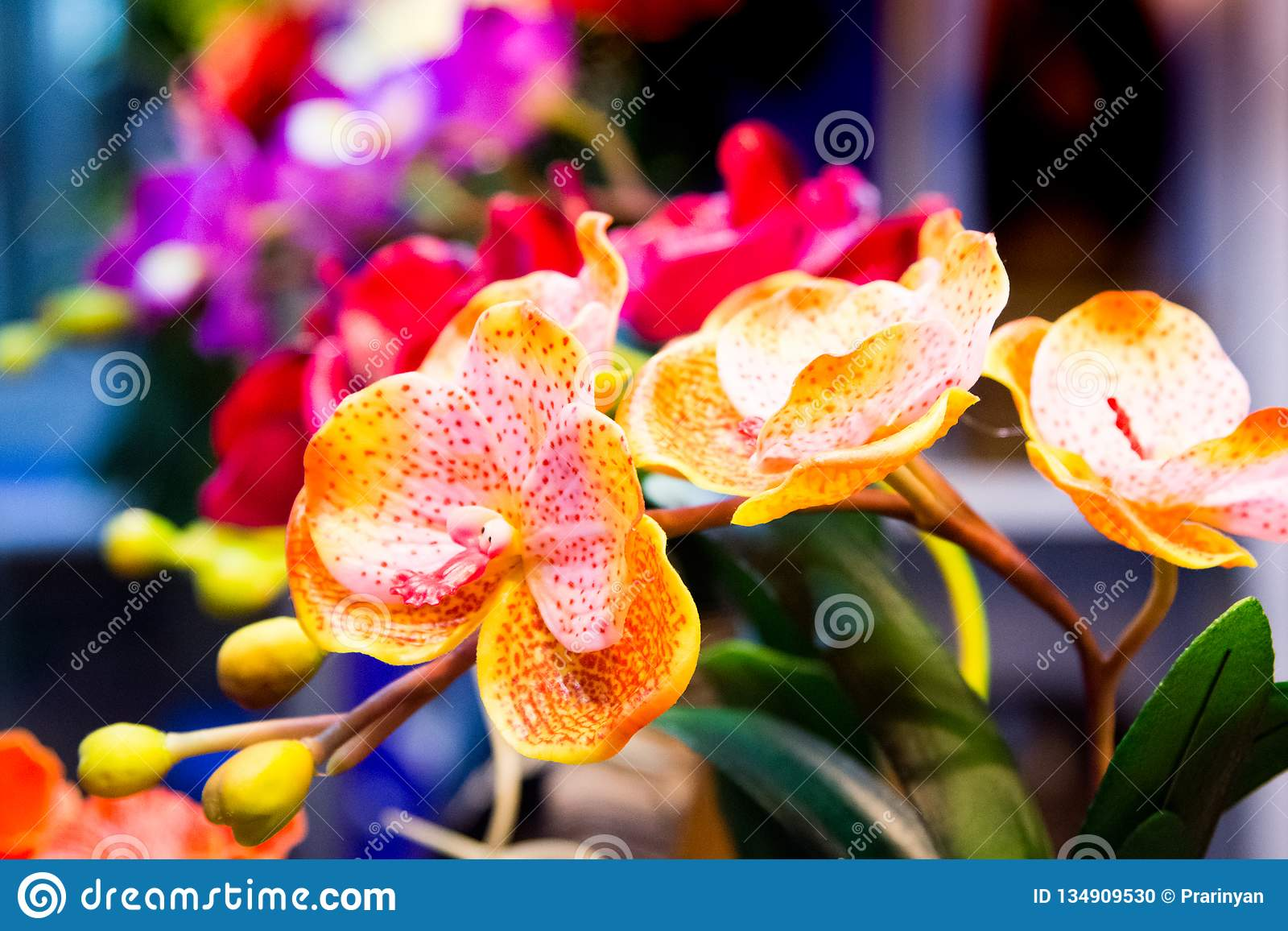 Orchid flower, colorful orchid