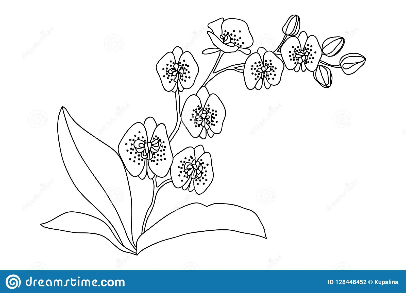 Orchid Flower Drawing Illustration. Black And White With ...