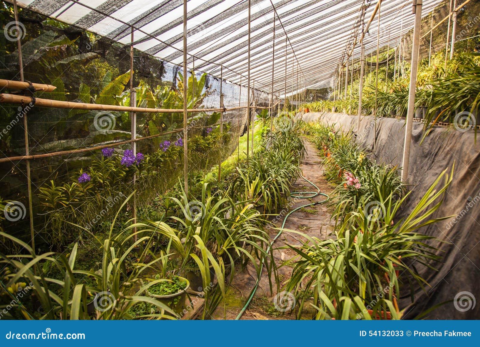 Backyard Flower Farmer : Orchid Flower Farm Stock Photo  Image 54132033