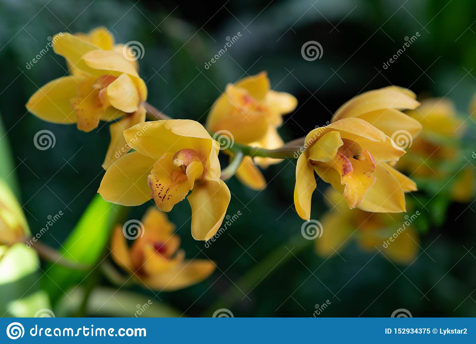 Orchid flower in garden at winter or spring day for postcard beauty and agriculture idea concept design. Phalaenopsis orchid
