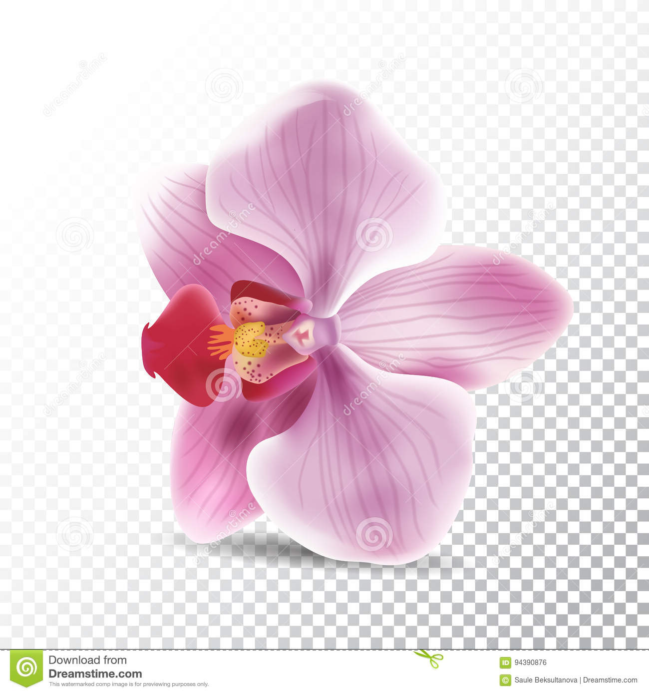 Orchid Flower Isolated On Transparent Background Vector Realistic Illustration Of Pink