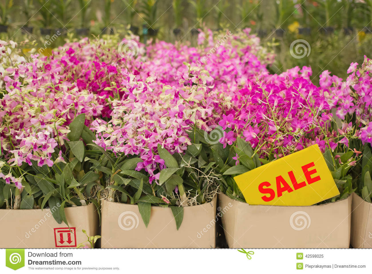 Orchid Flower Pots On Sale In Orchid Farm Stock Image