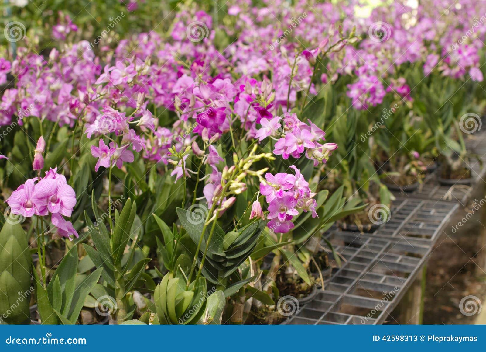 Plant Pots For Sale Part - 50: Farm Flower Orchid Sale ...