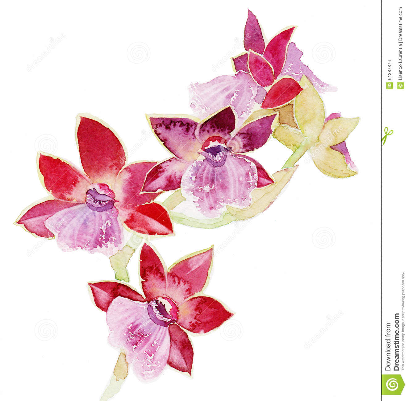 orchids wallpapers download