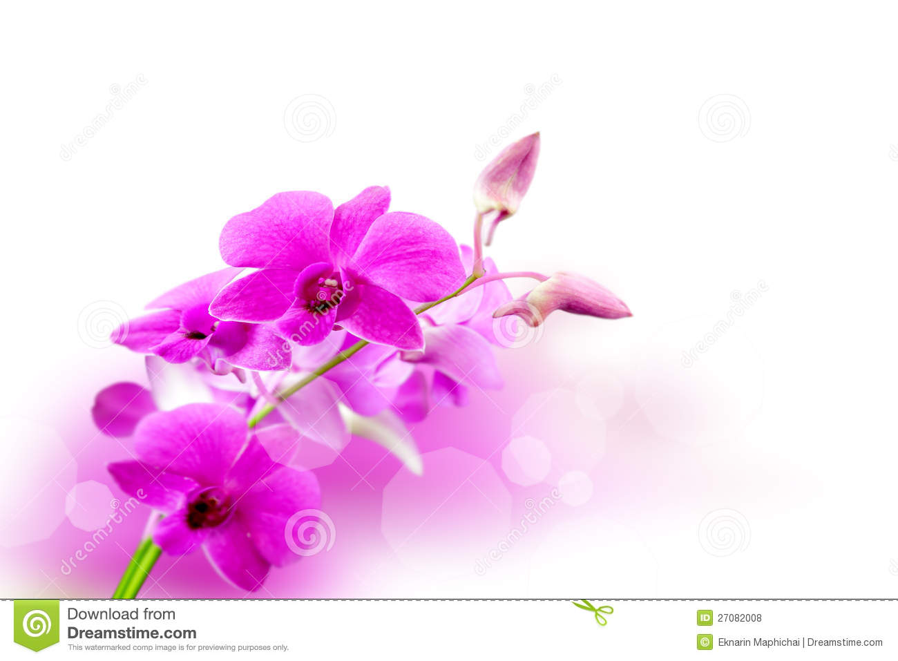 Orchid Flowers Background Royalty Free Stock Photos ...