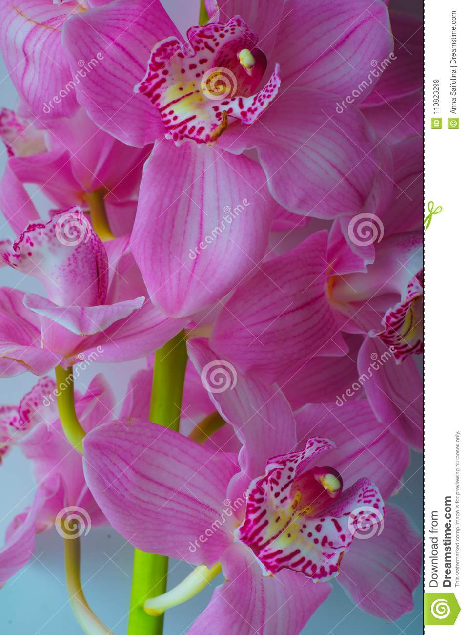 The Orchid Flowers Beautiful Floral Background For Greeting Cards