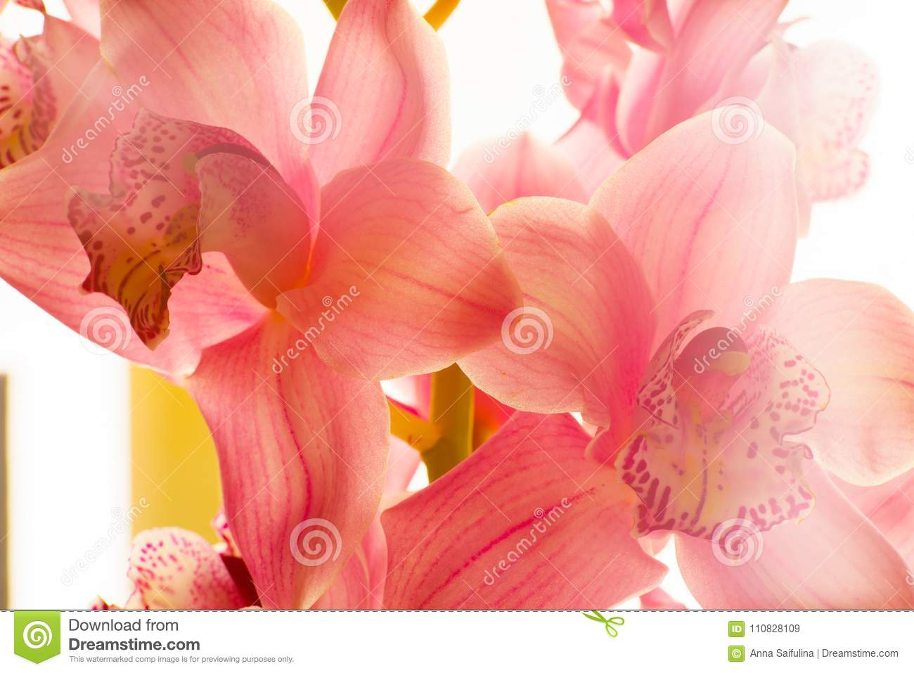 The Orchid Flowers Beautiful Floral Background For Greeting Cards ...