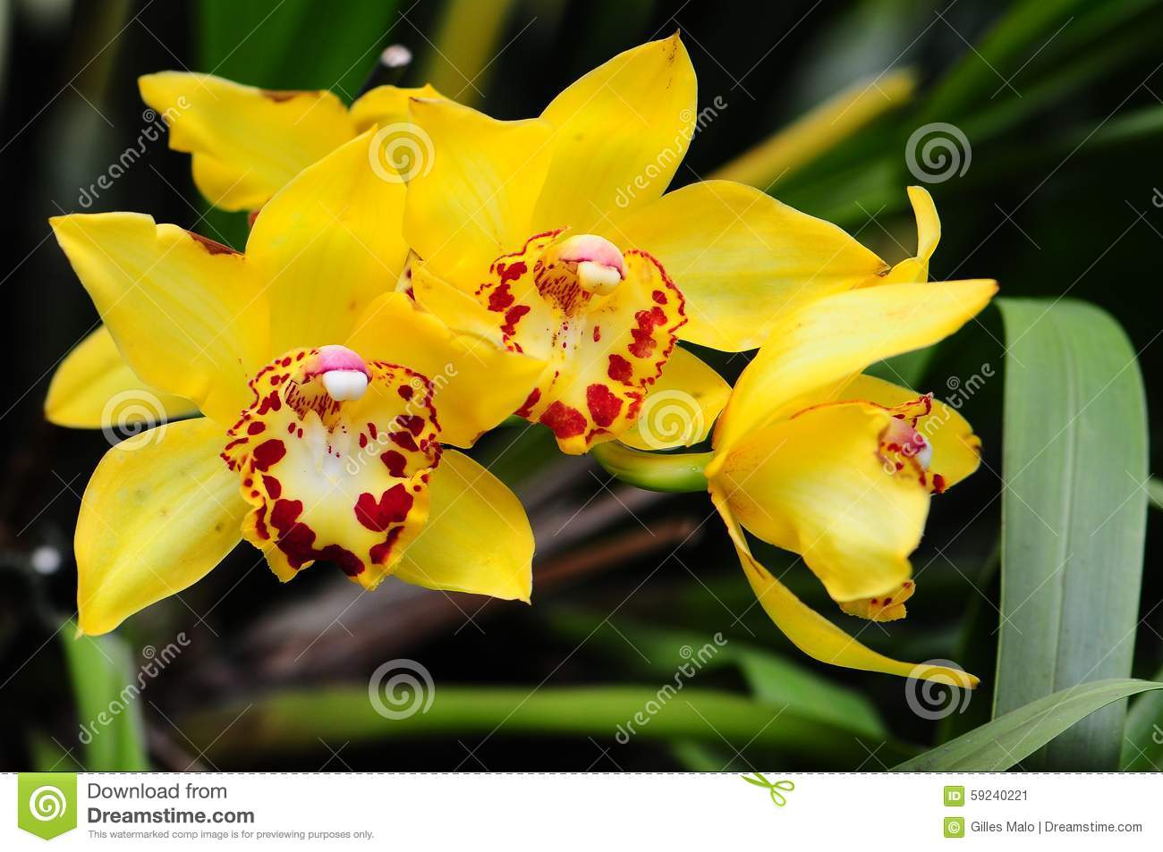Orchid Flowers Florida Stock Image Image Of Background 59240221