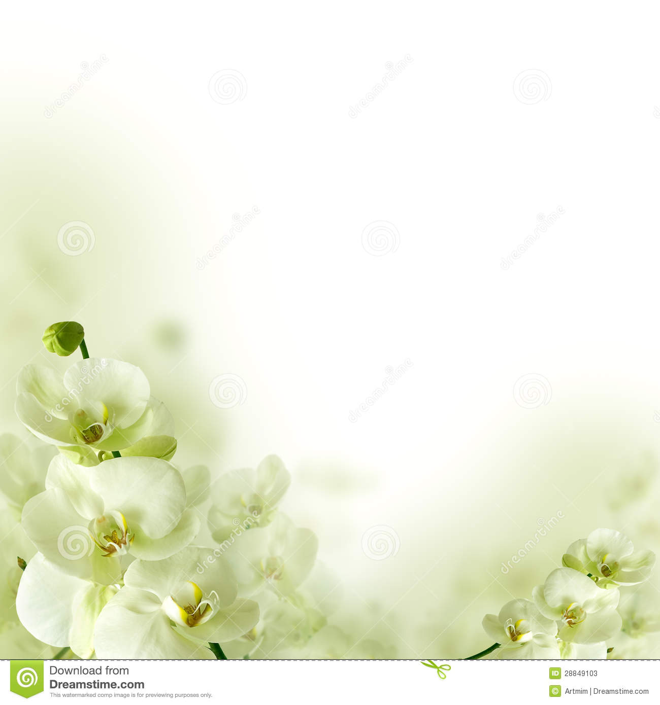 Orchid flowers and greenery floral background stock photos image