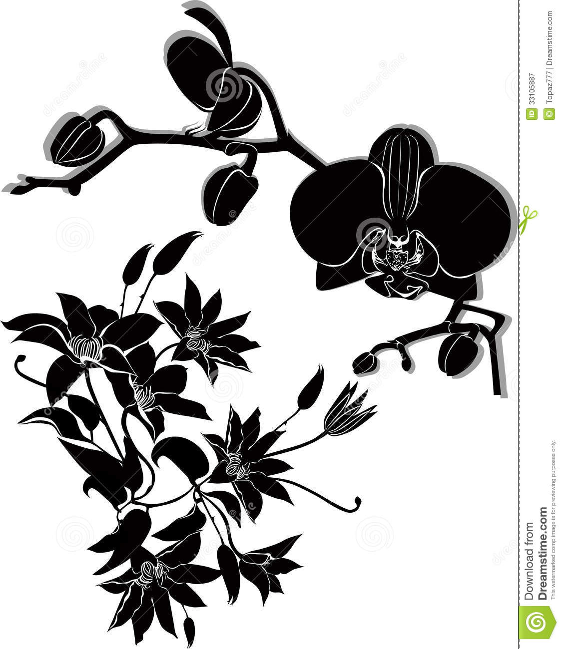 Orchid Flowers Vector Clematis Royalty Free Stock Photography - Image ...
