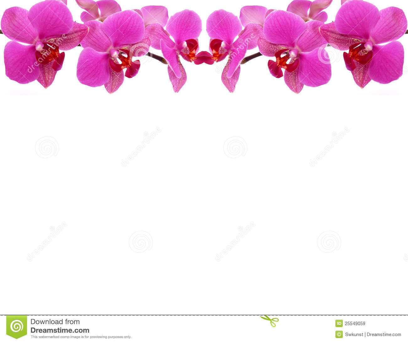 Red flowers border vector stock image - Orchid Frame Royalty Free Stock Images Image 25549059
