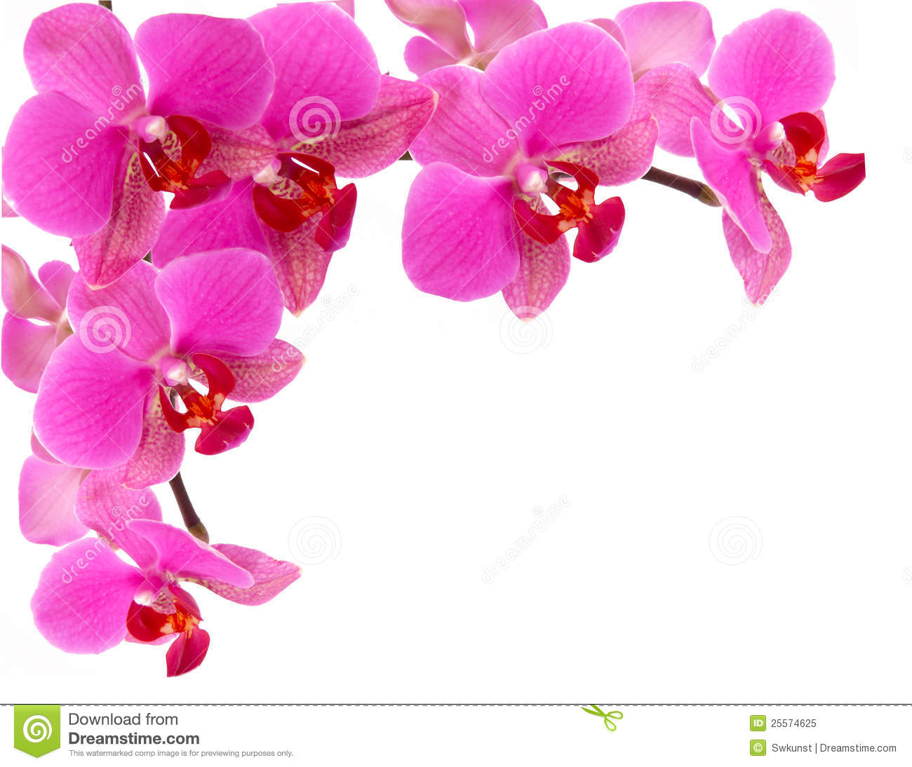 Orchid Frame Royalty Free Stock Photo - Image: 25574625