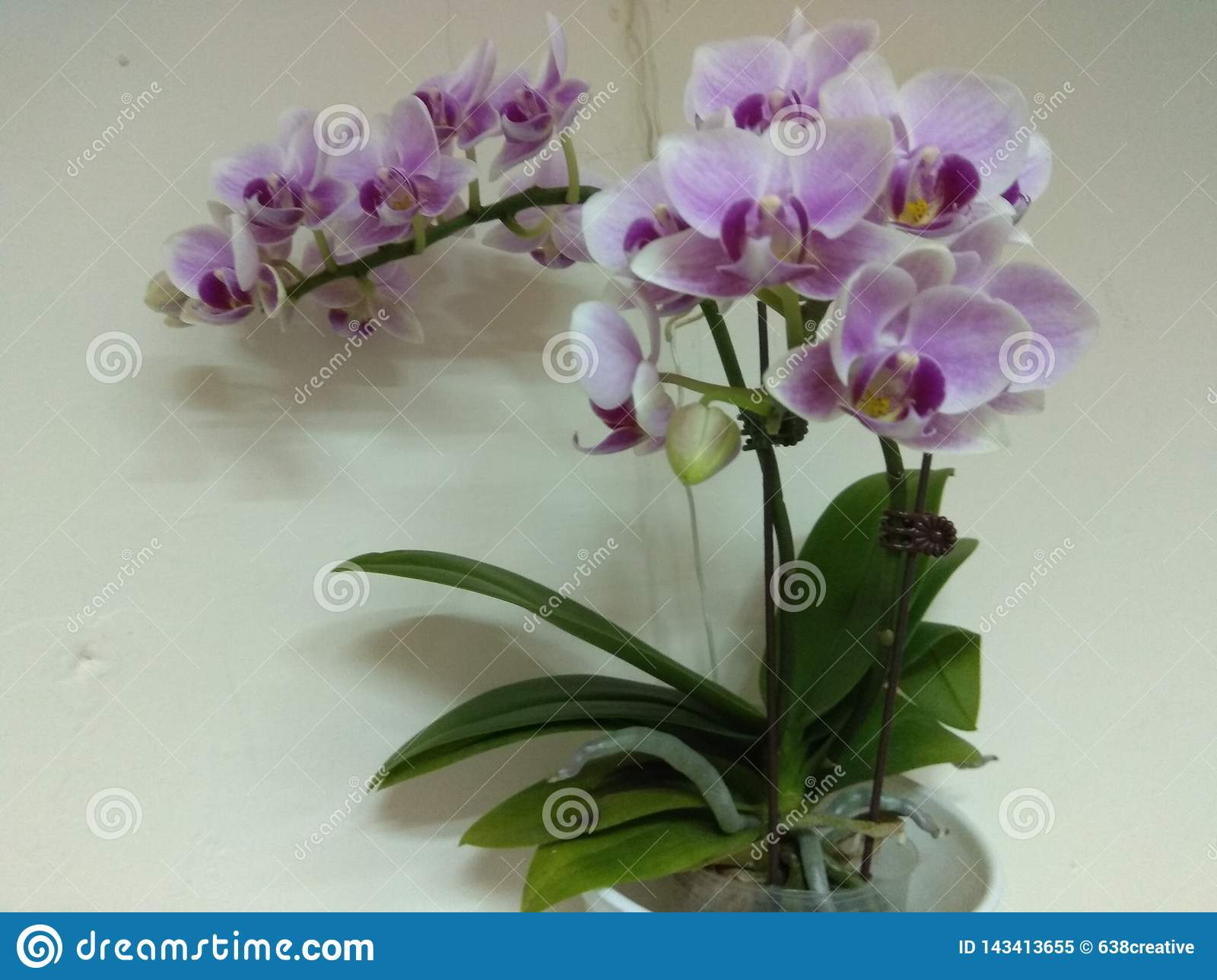 Orchid, one of the Four Gentlemen in Chinese art