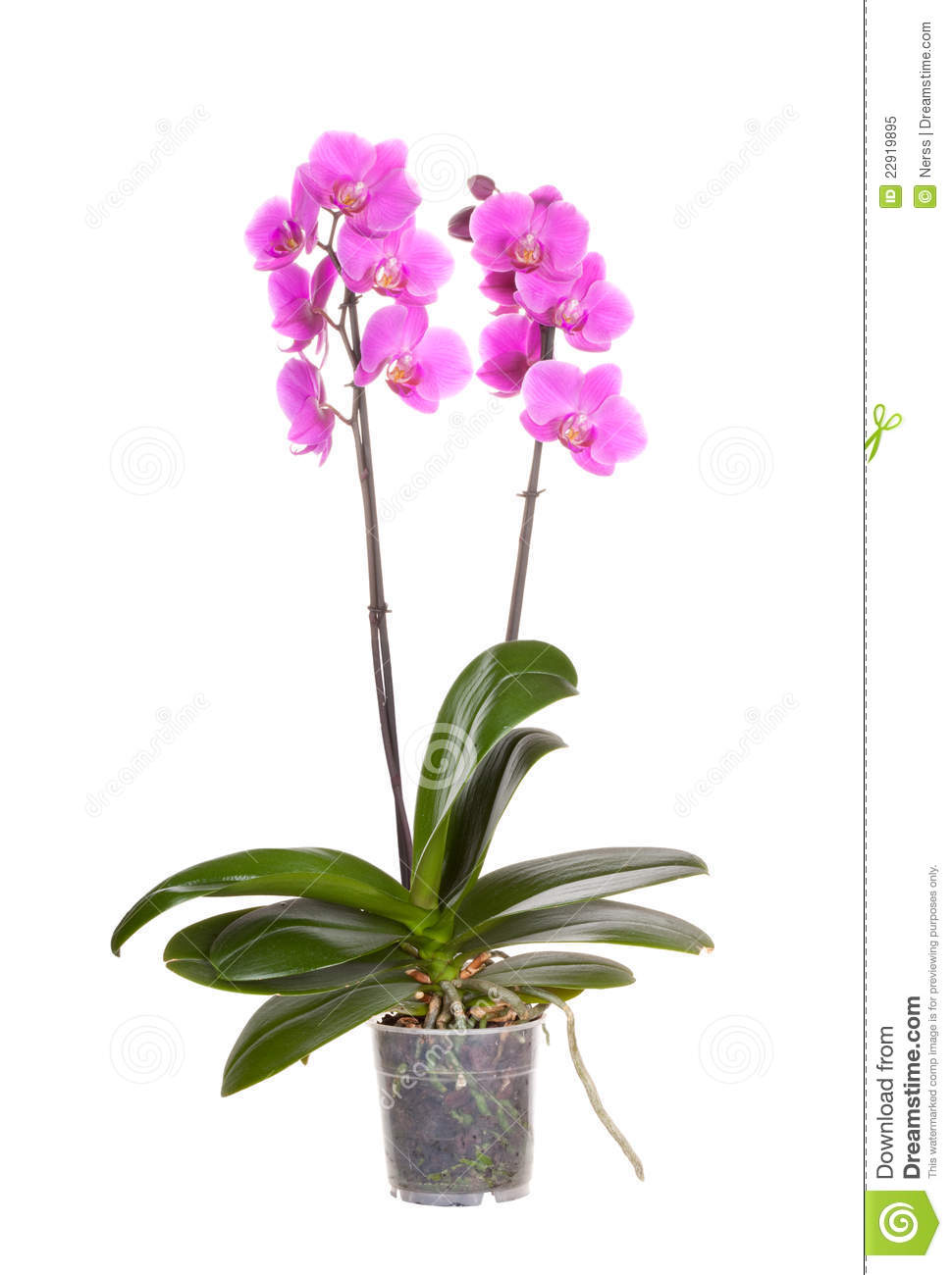 Orchid pot flower
