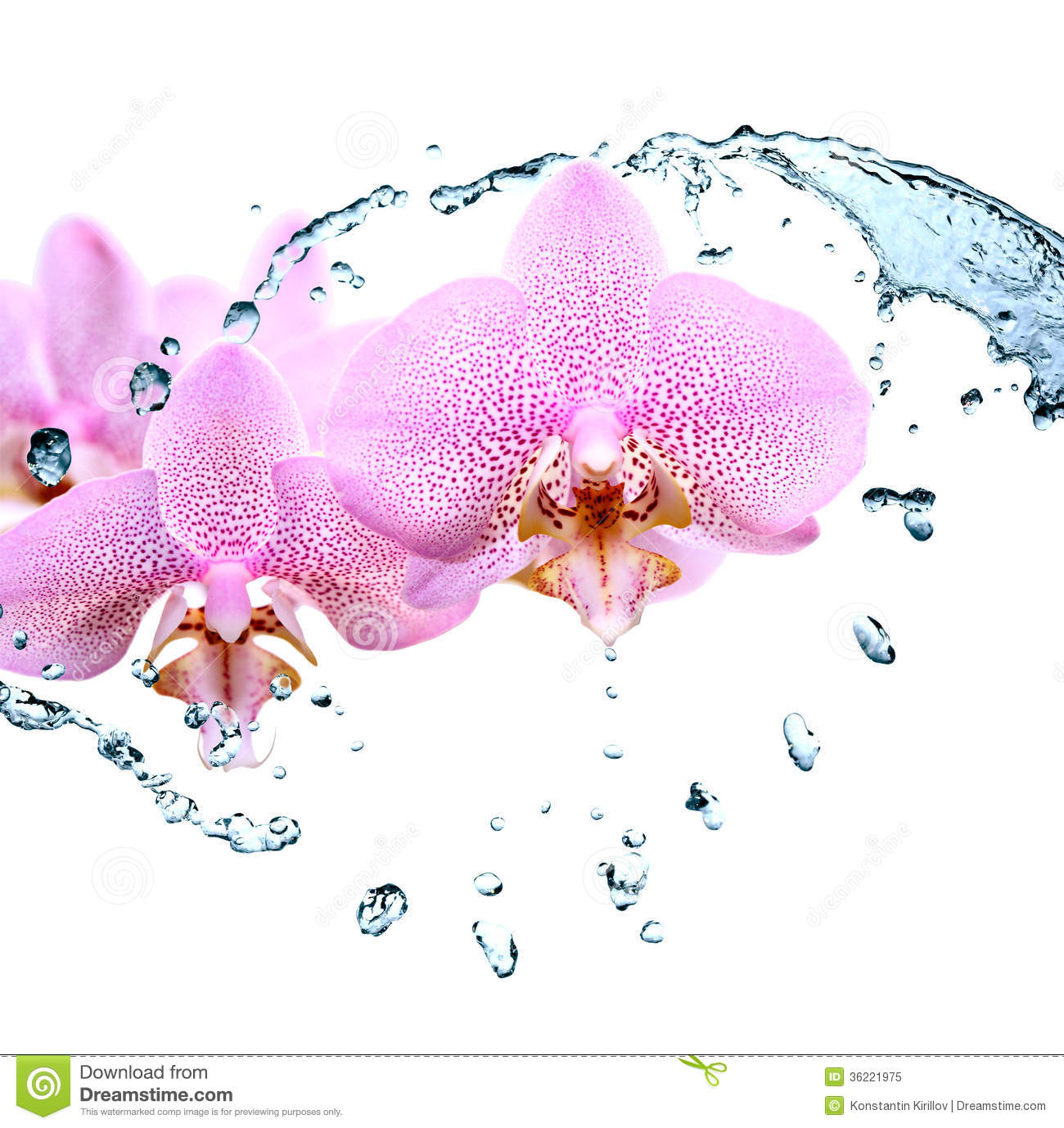 White Orchid Water Pink: Orchid And Water Royalty Free Stock Photo