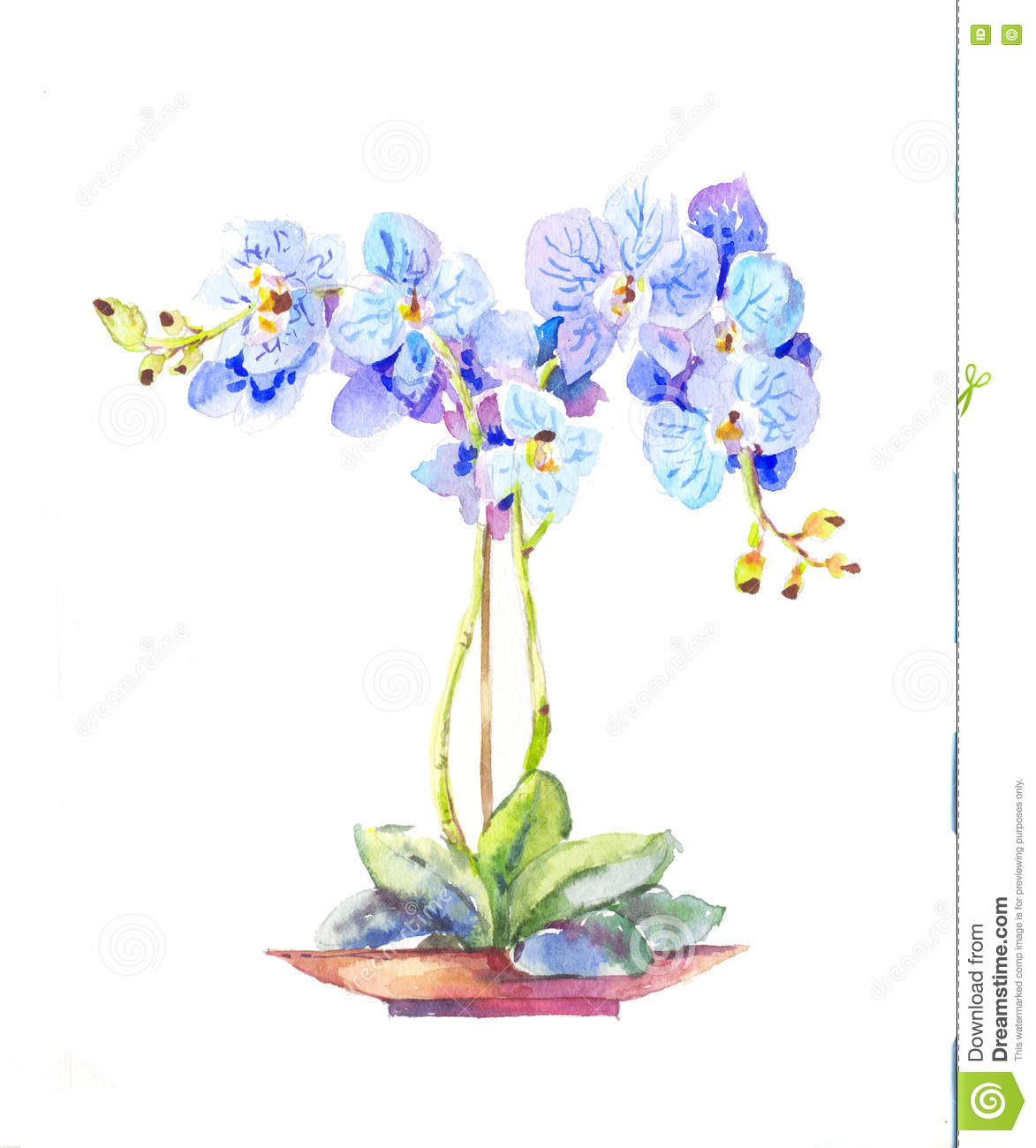 orchid e mise en pot orchid e bleue d 39 aquarelle dans un pot illustration de vecteur image. Black Bedroom Furniture Sets. Home Design Ideas