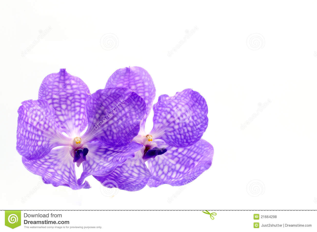 orchid e violette sur le blanc photos libres de droits image 21664298. Black Bedroom Furniture Sets. Home Design Ideas