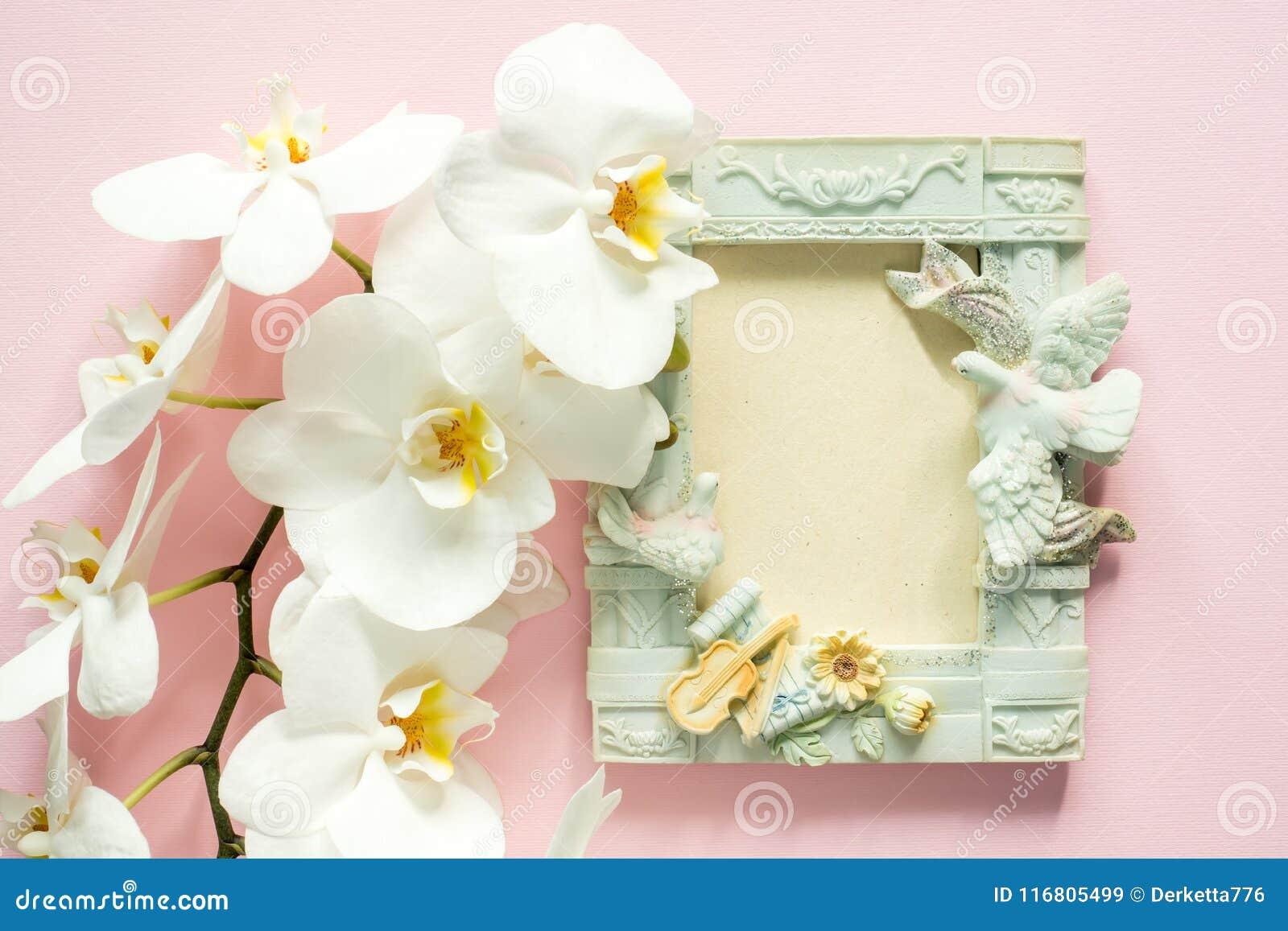 Orchidea bianca e una bella struttura vuota per testo su un fondo rosa