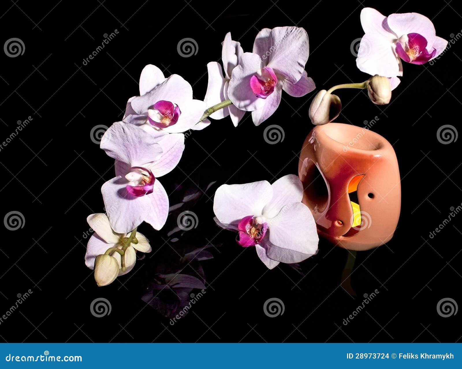 Orchidea i płonąca świeczka