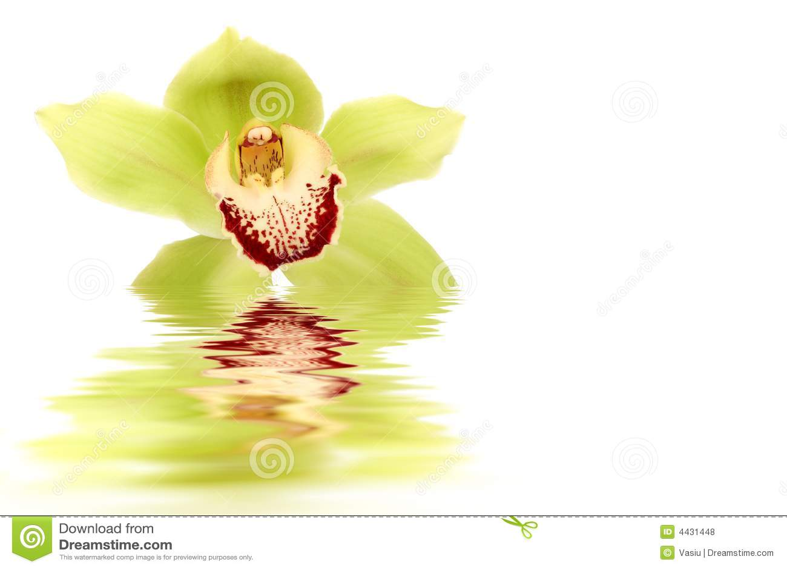 Orchidea verde fotografia stock immagine di aromatherapy for Orchidea acqua