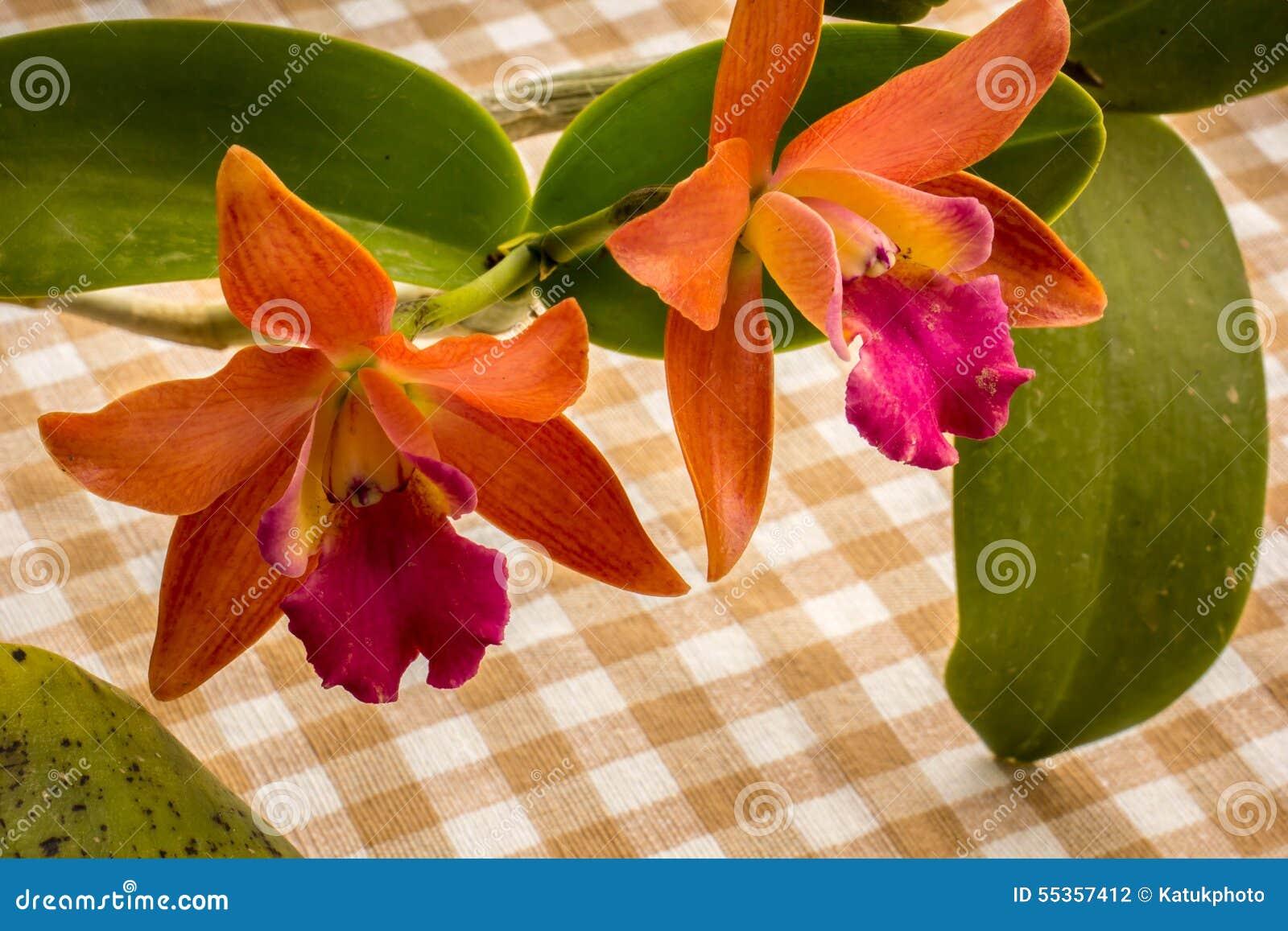Orchidee arancio sulla tavola nello stile d annata