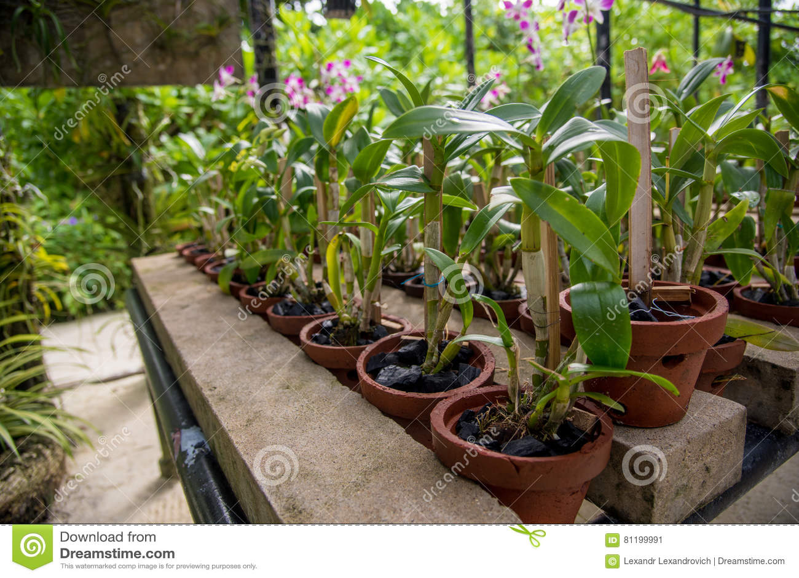 Gewchshaus boden perfect gurken botanisch cucumis sativus for Garten arbeiten