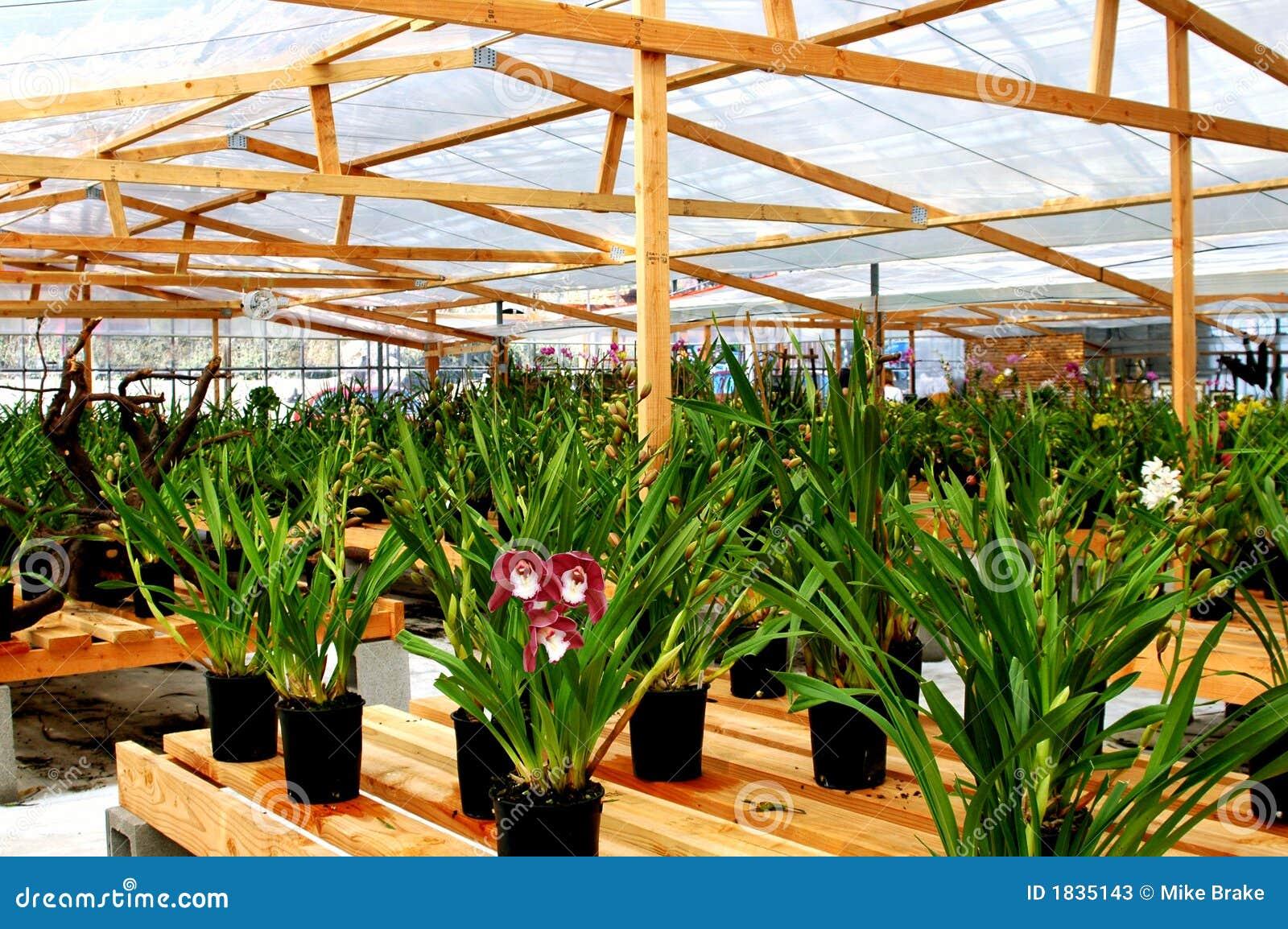 Orchidee-Gewächshaus