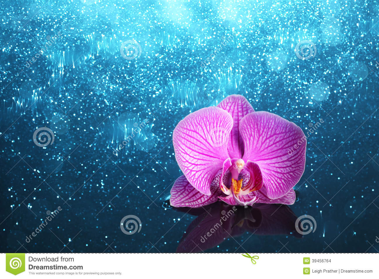 Orchidee in water