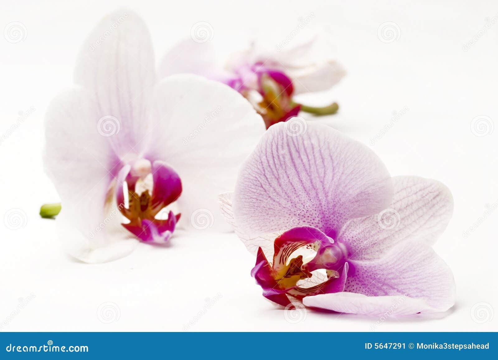 orchideen stockbild bild 5647291. Black Bedroom Furniture Sets. Home Design Ideas