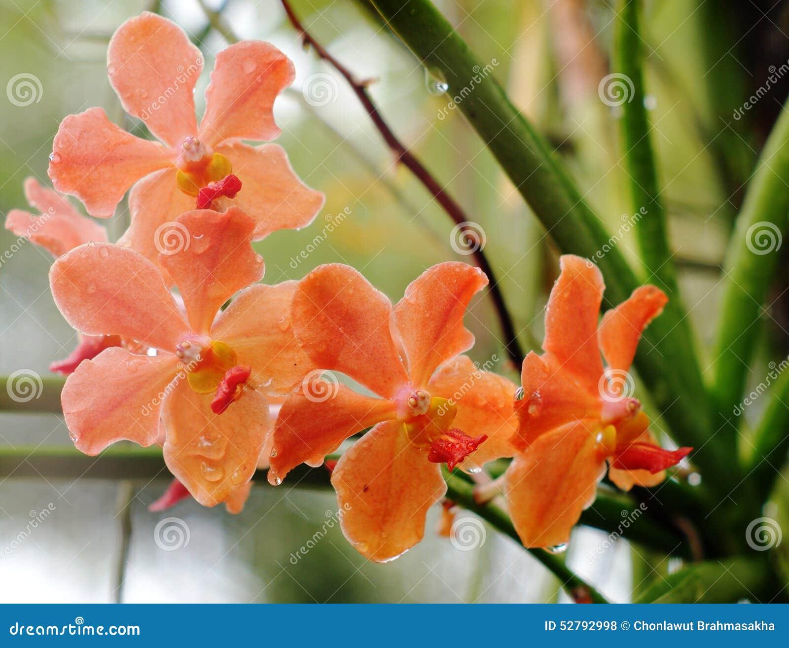 Orchideen Beleuchtung | Orchideen Unter Naturlicher Beleuchtung Stockfoto Bild Von Bluhen