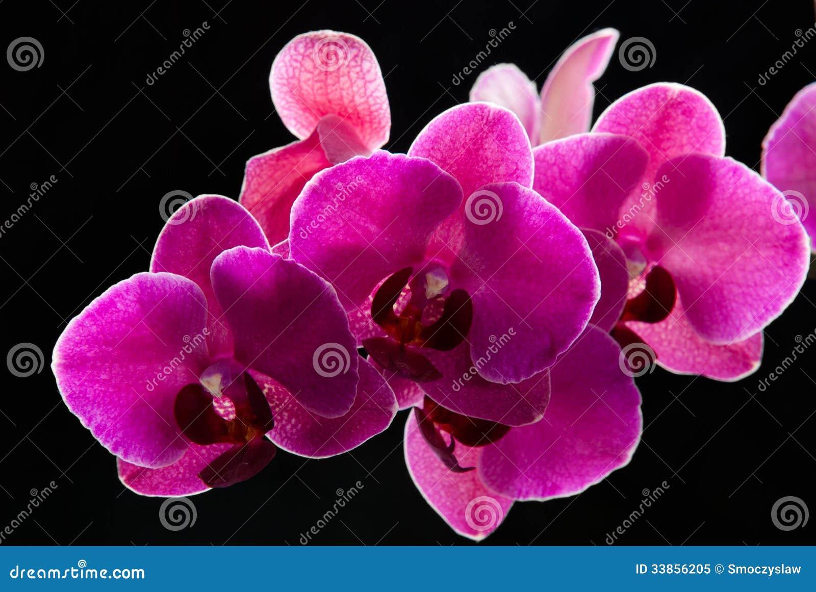 Orchideenblumen