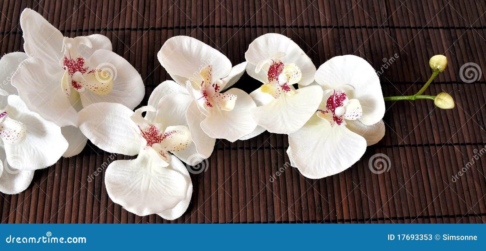 Orchidei wellness