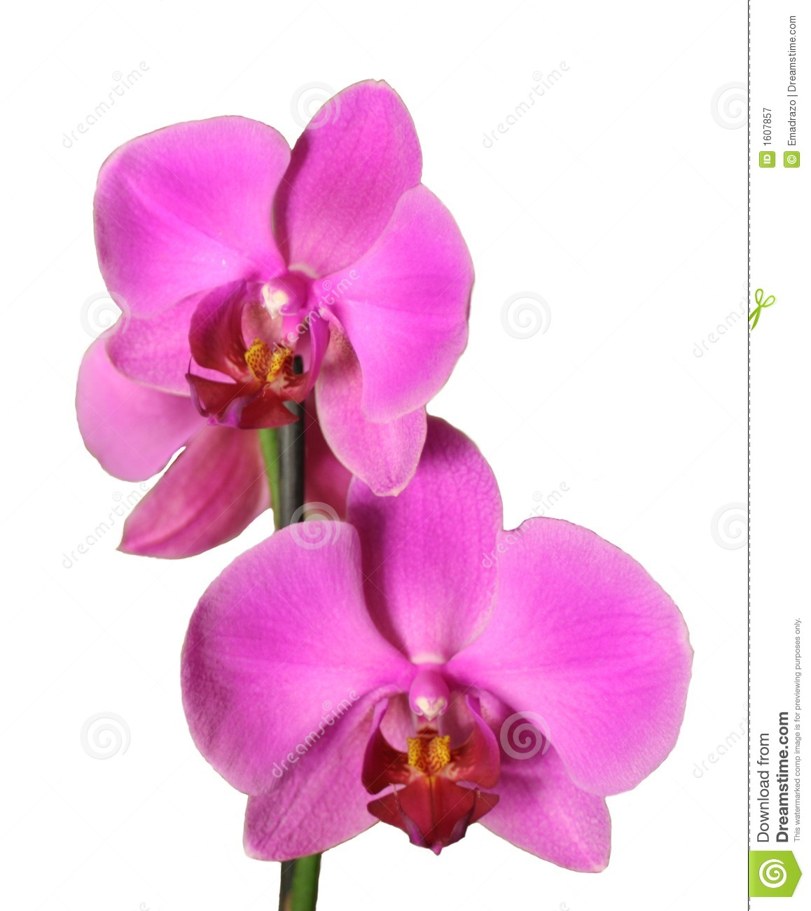 How to Start an Orchid Garden to Sell in Market