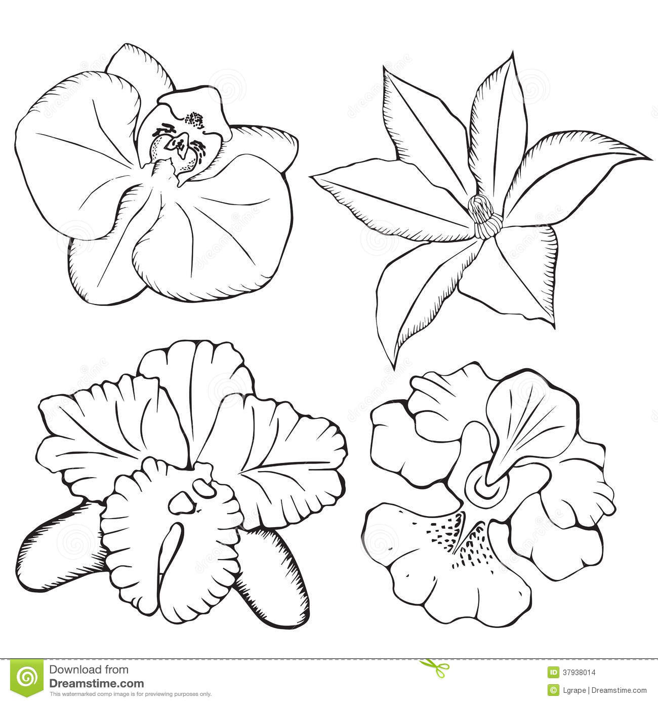 Orchids. Contour Flowers On A White Background. Stock ...