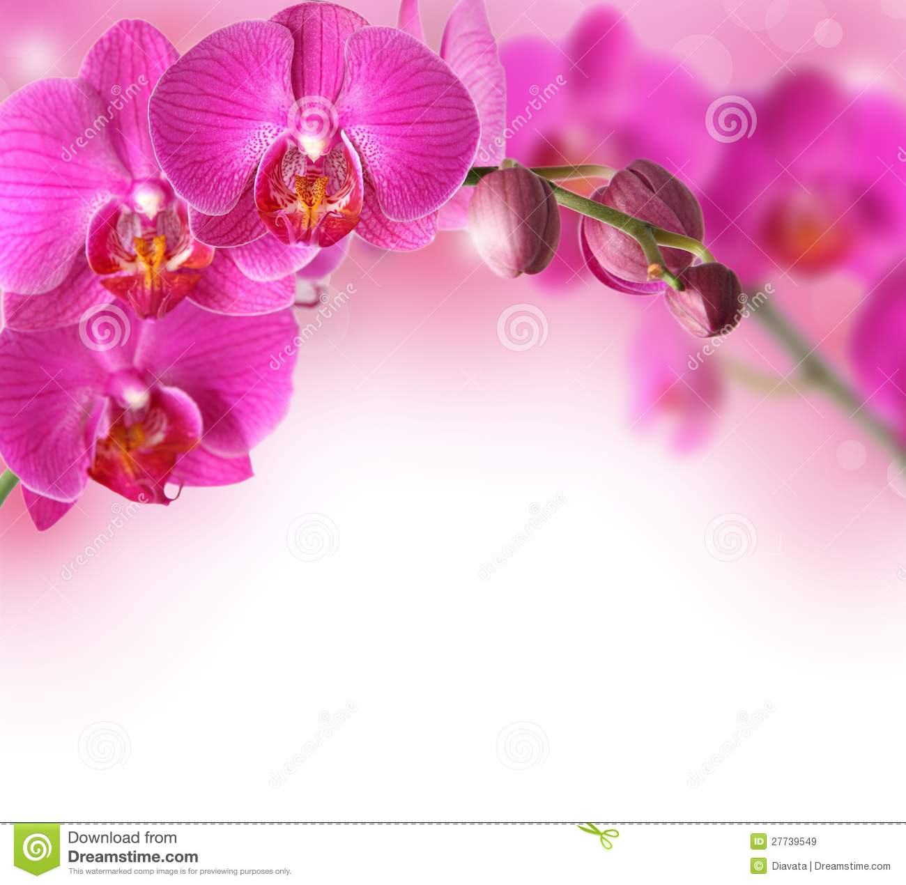 Orchids Flowers Border Royalty Free Stock Images - Image: 27739549