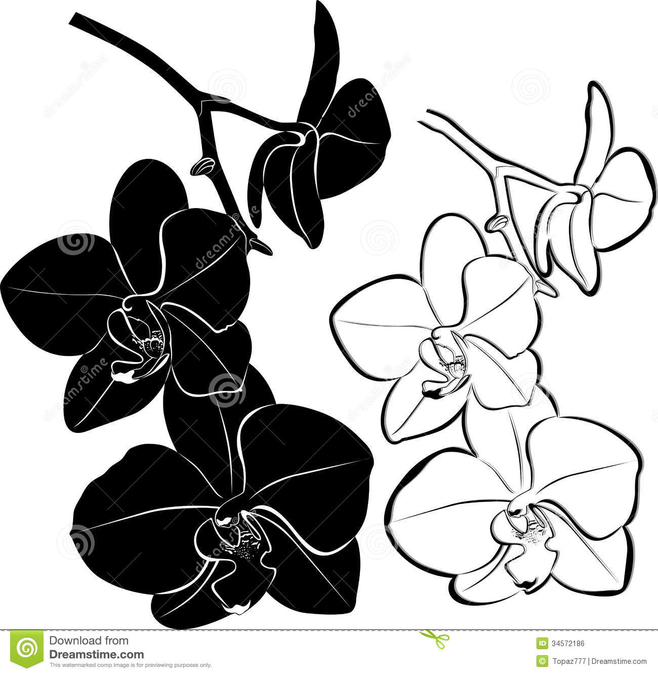 Gousicteco orchid drawing images orchid drawing mightylinksfo