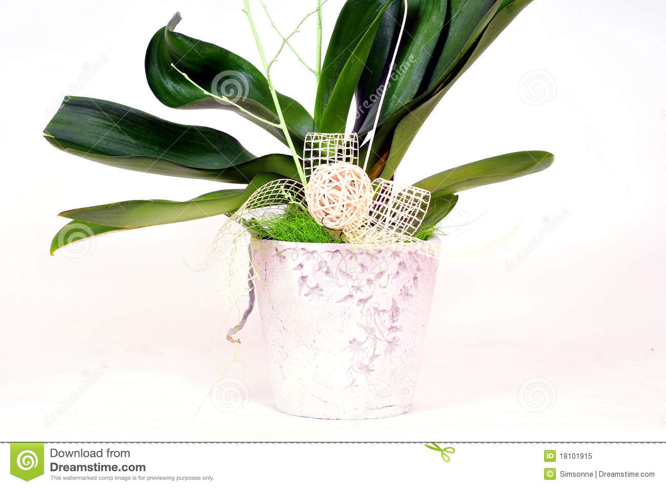 Orchids Flowers Pot Decorative Royalty Free Stock Photo ...